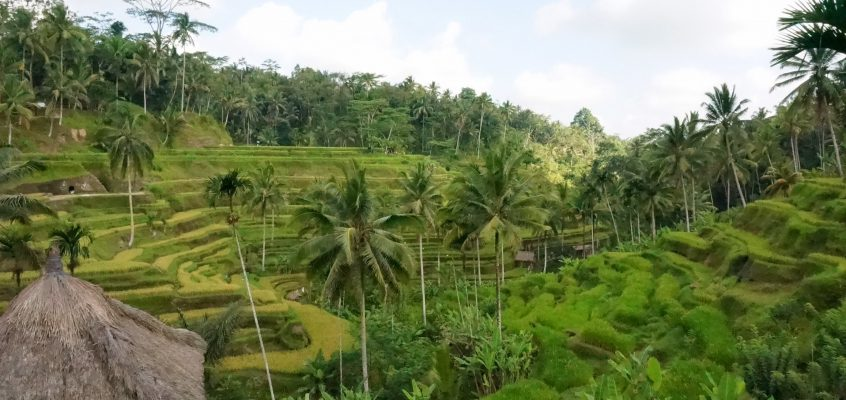 美しい バリ島テガララン の魅力と行き方