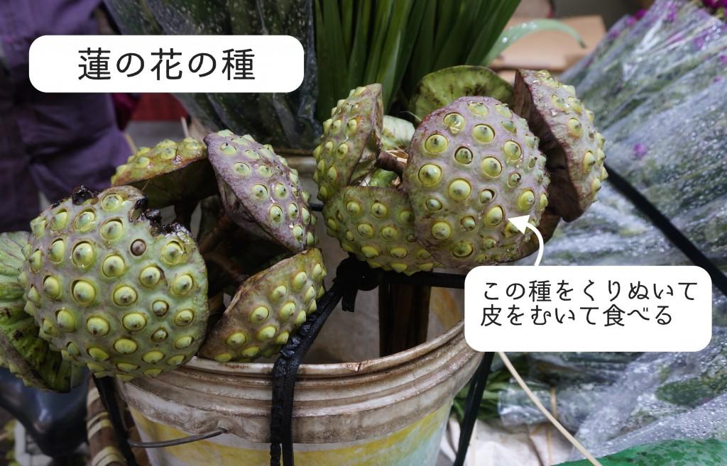 蓮の花の種